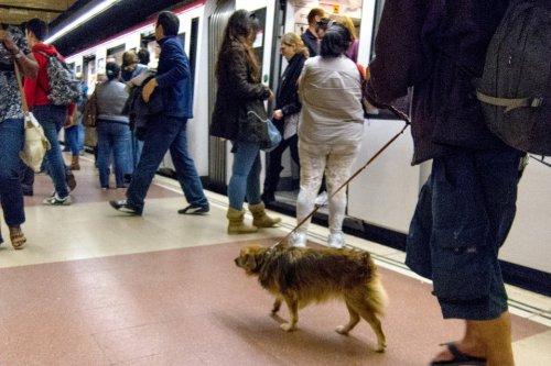 usuario-del-metro-lleva-su-perro