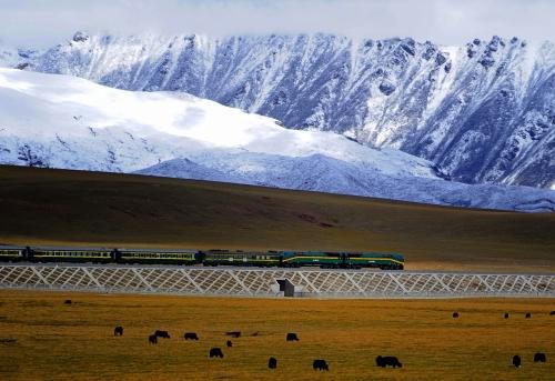 Qingzang-ferrocarril-tibet-china