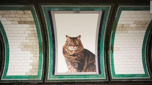 londres-publicidad-protectora_animales